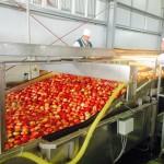 Александр ТКАЧЕВ: «Мы только в начале пути по развитию садоводства…»